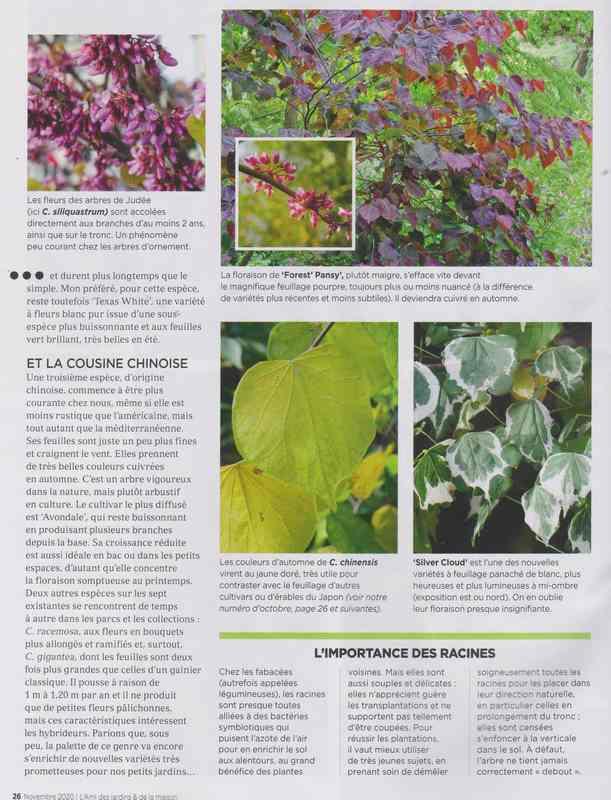 au jardin - Page 7 10b10