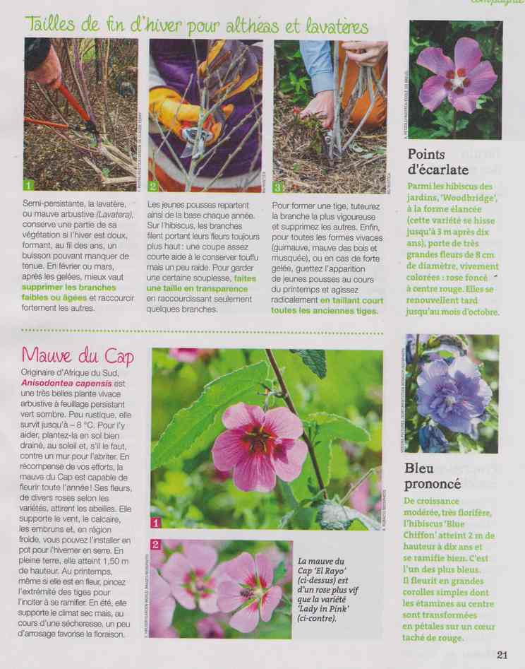 au jardin - Page 27 10b12