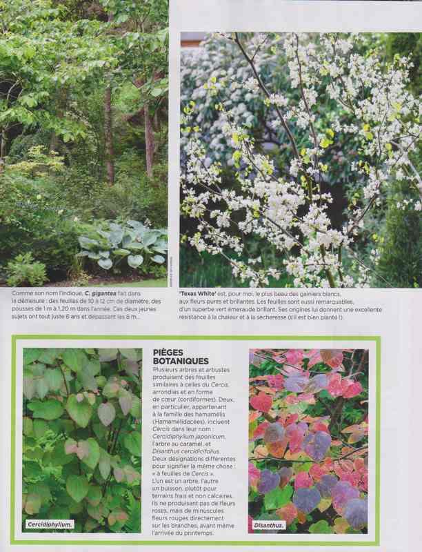 au jardin - Page 7 10c10