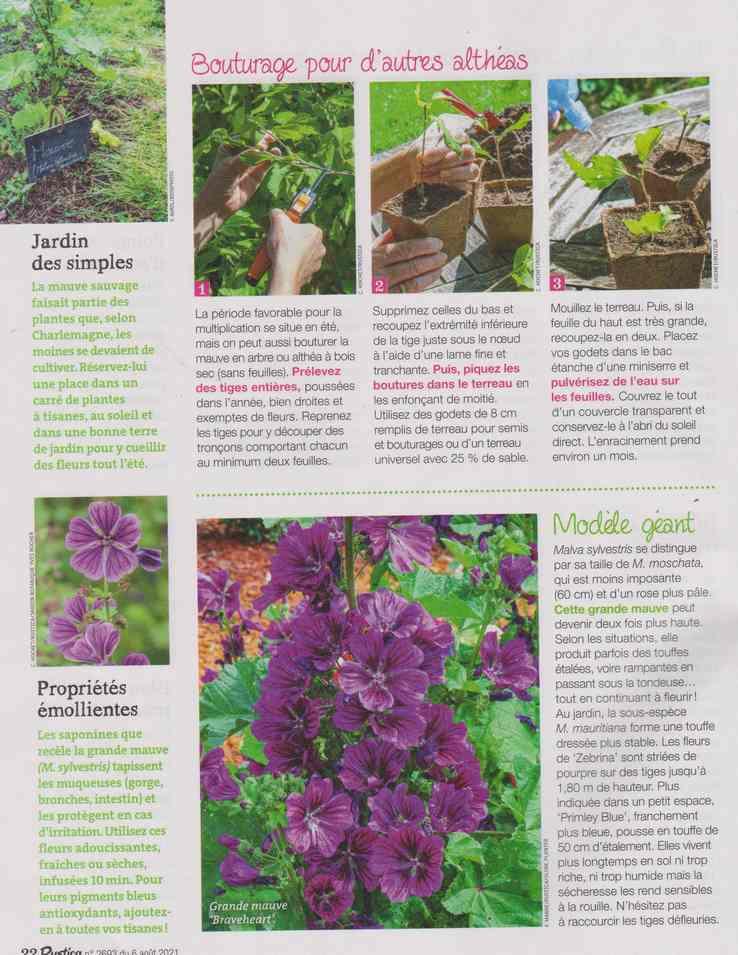 au jardin - Page 27 10c12
