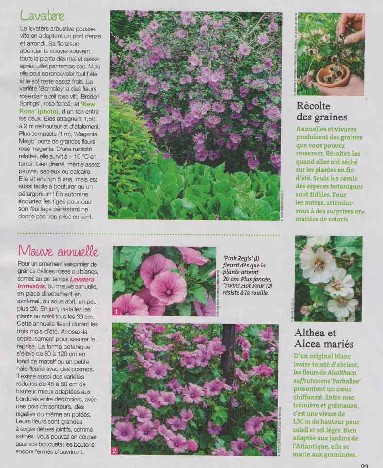 au jardin - Page 27 10d10