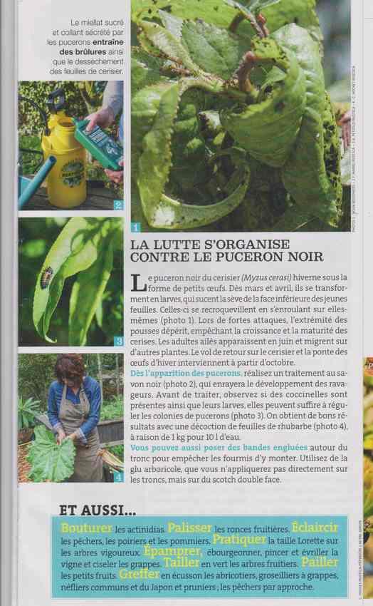 les maladies au jardin - Page 3 1114