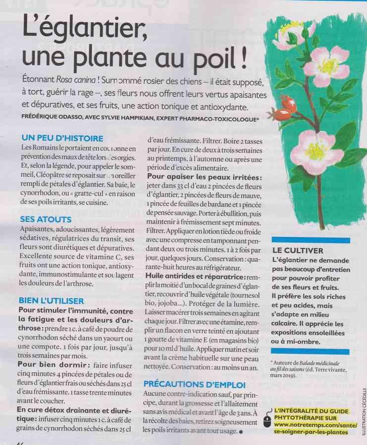 les plantes qui soignent - Page 12 118