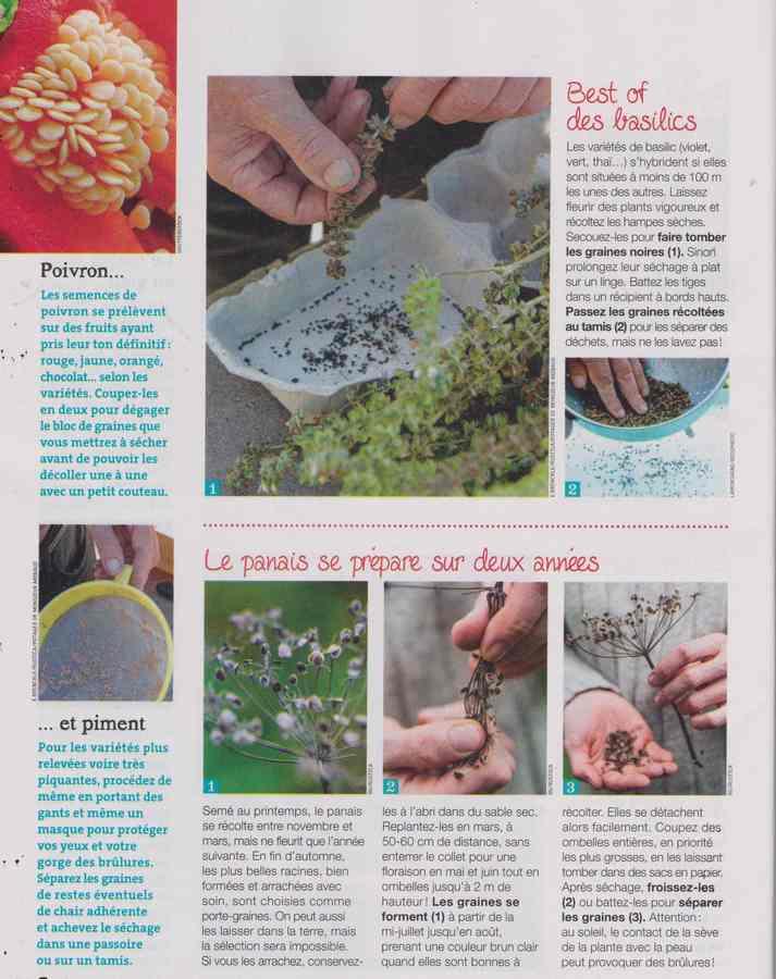 au jardin - Page 27 11c12
