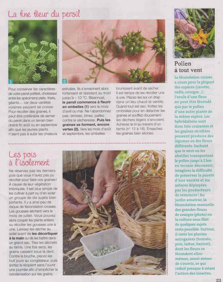 au jardin - Page 27 11d12