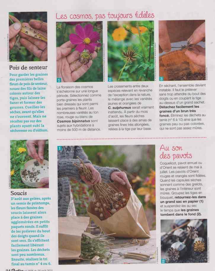 au jardin - Page 27 11e12