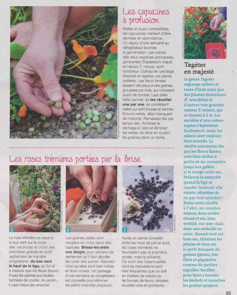 au jardin - Page 27 11f12