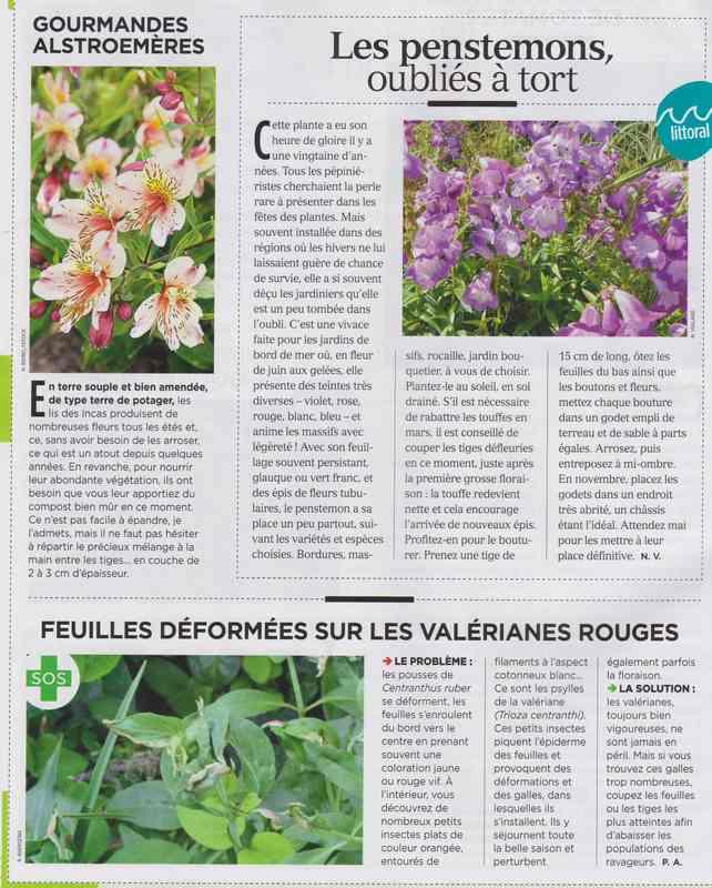 au jardin - Page 37 1210