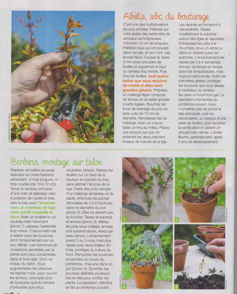 au jardin - Page 27 12a13