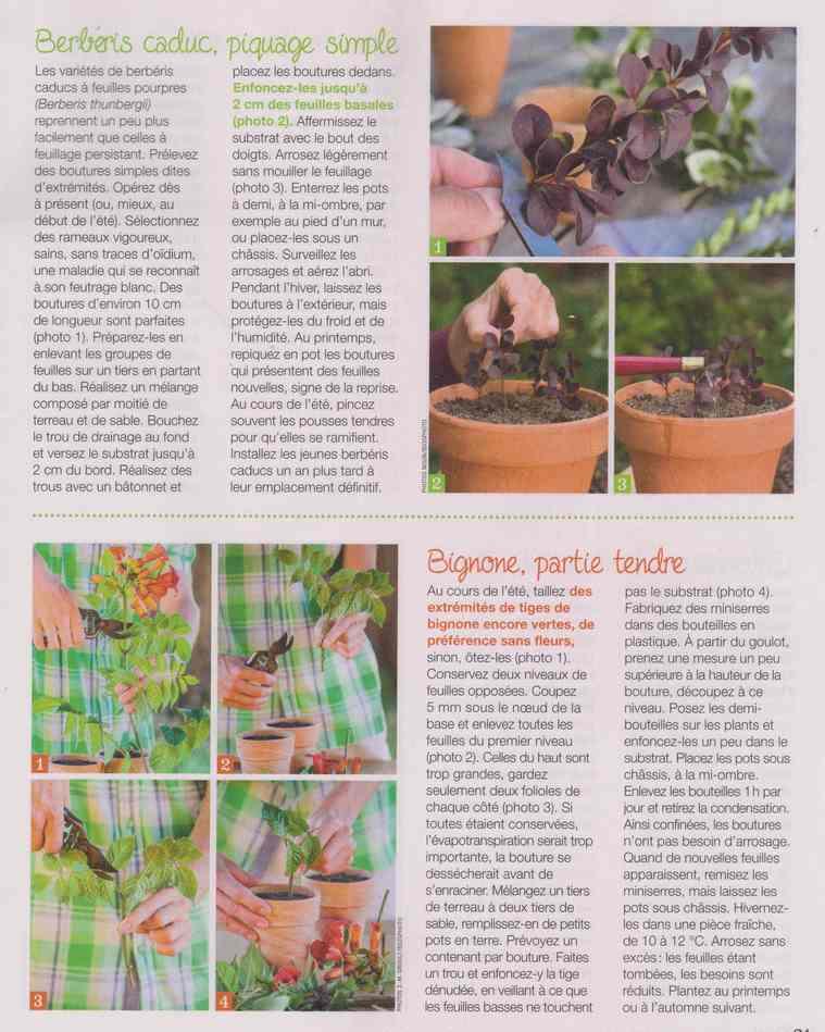au jardin - Page 27 12d11