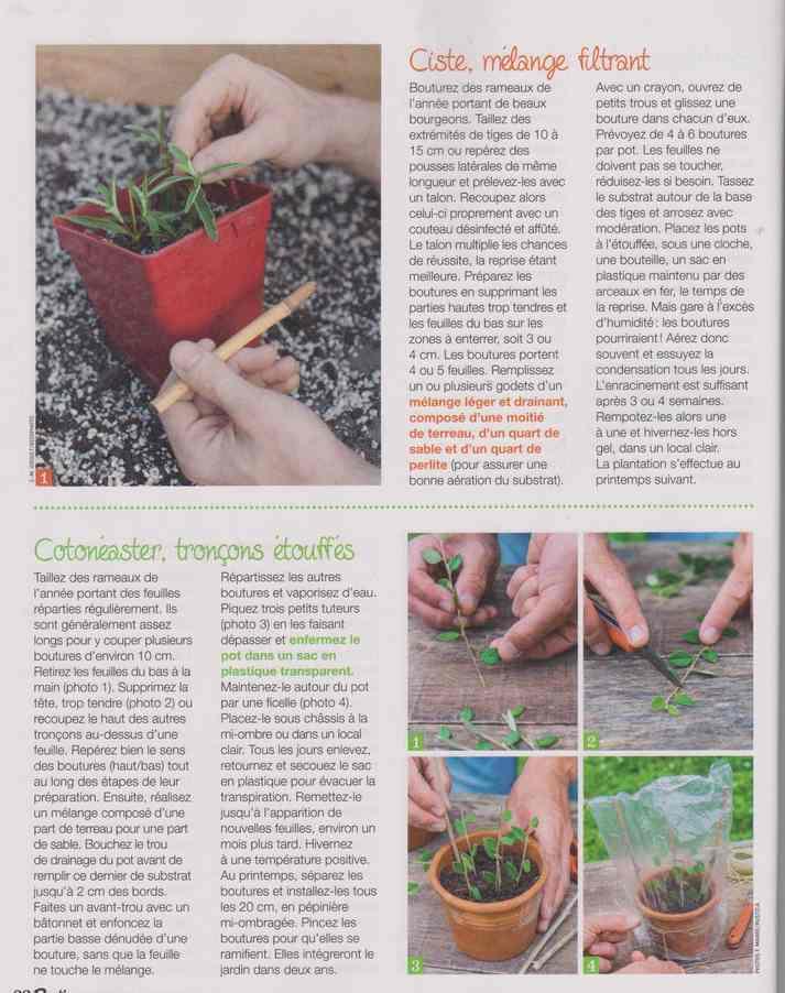 au jardin - Page 27 12e11