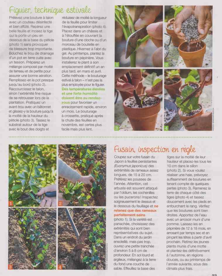 au jardin - Page 28 12f11