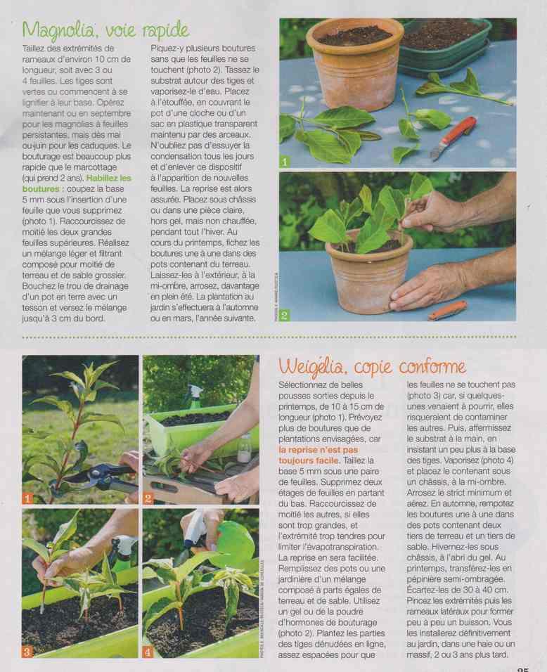 au jardin - Page 28 12h10