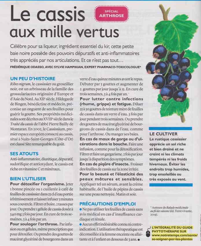 les plantes qui soignent - Page 13 135