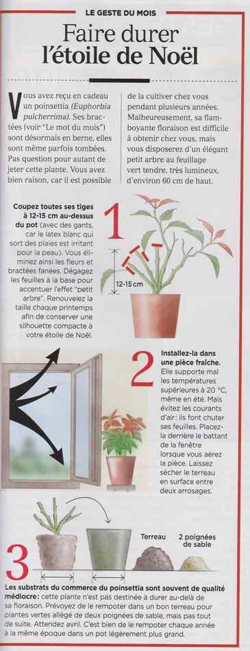 plantes d'intérieur 139