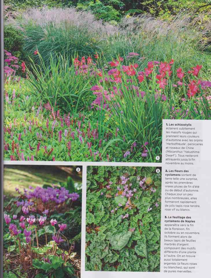 au jardin - Page 28 13a16