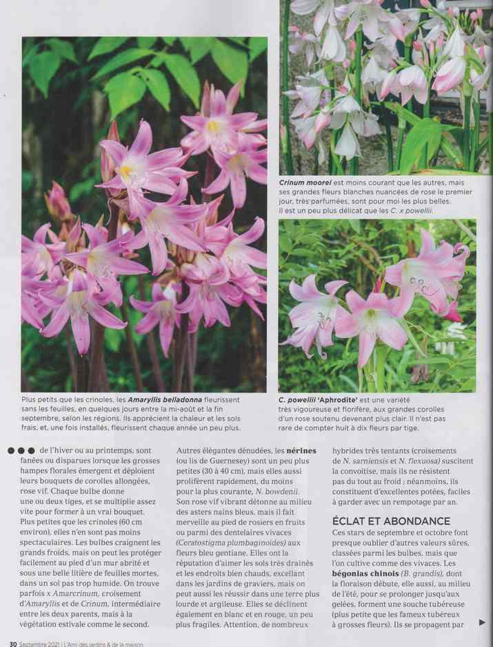 au jardin - Page 28 13b12