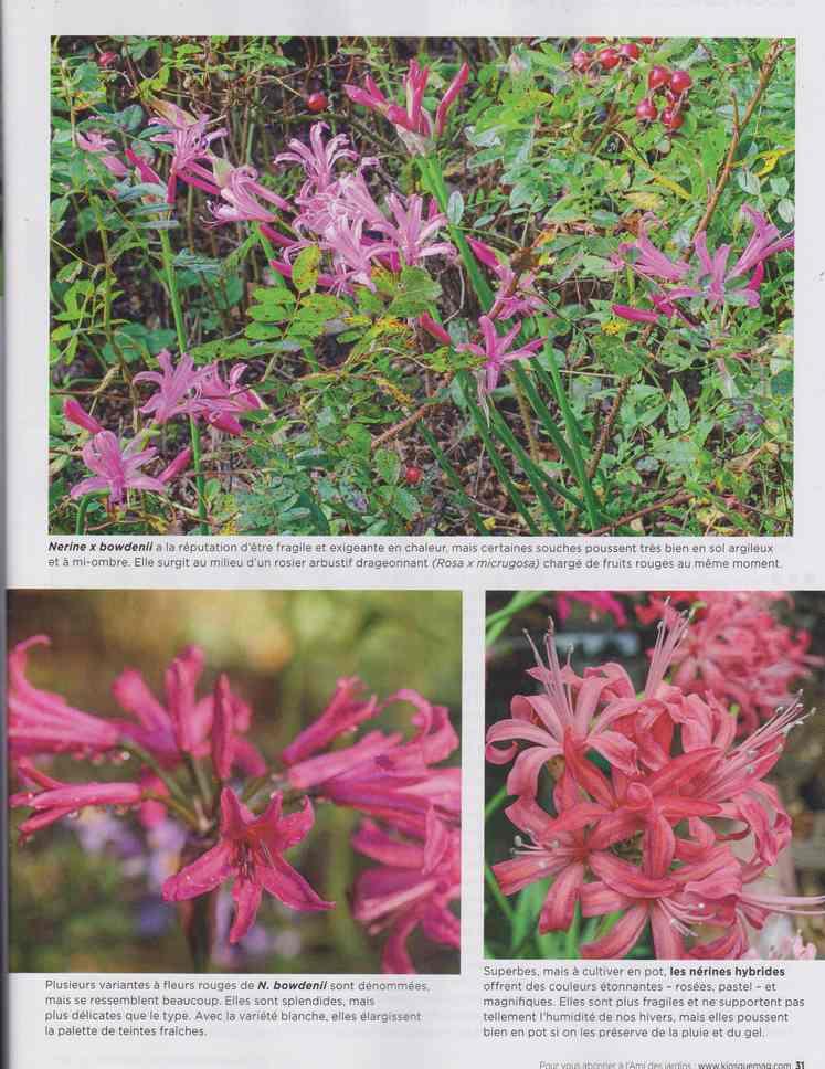 au jardin - Page 28 13c11