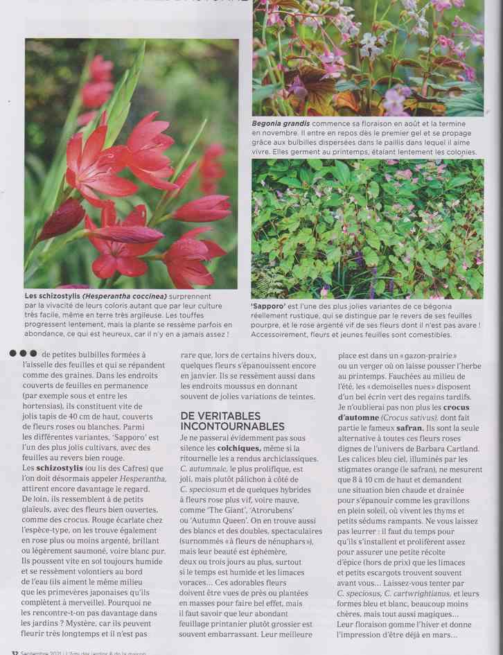 au jardin - Page 28 13d12