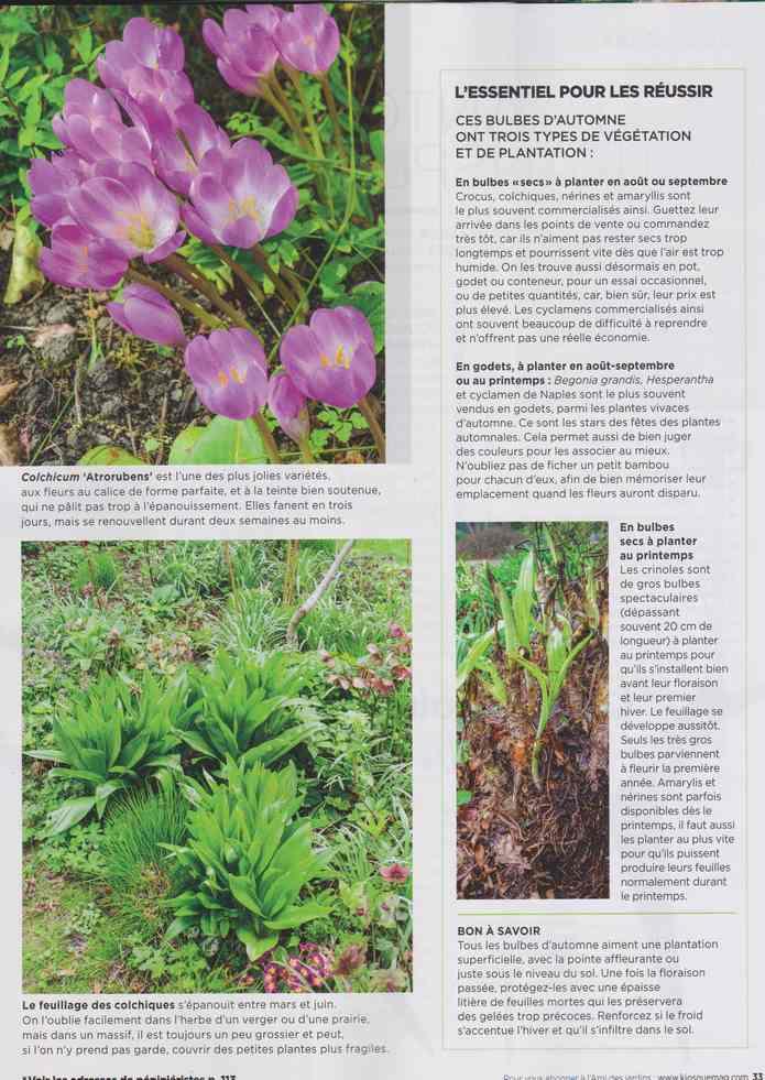 au jardin - Page 28 13e11