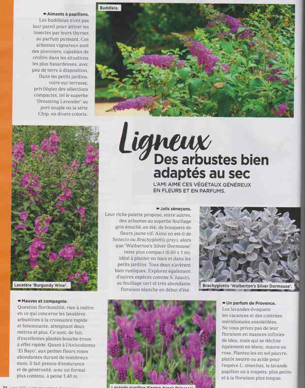au jardin - Page 37 13h10