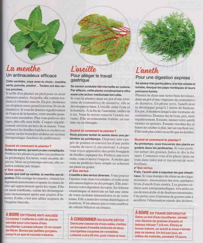 les plantes qui soignent - Page 14 148