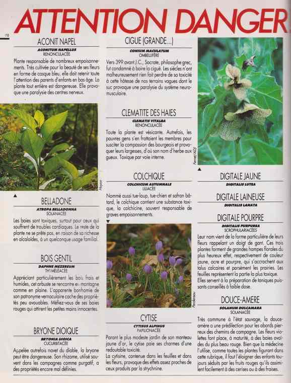 au jardin - Page 5 155