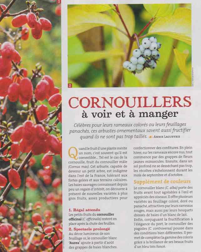 au jardin - Page 5 156