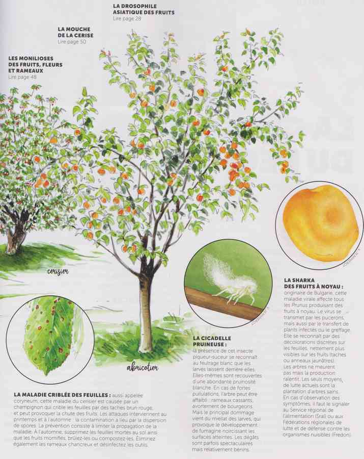 les maladies au jardin 15a10