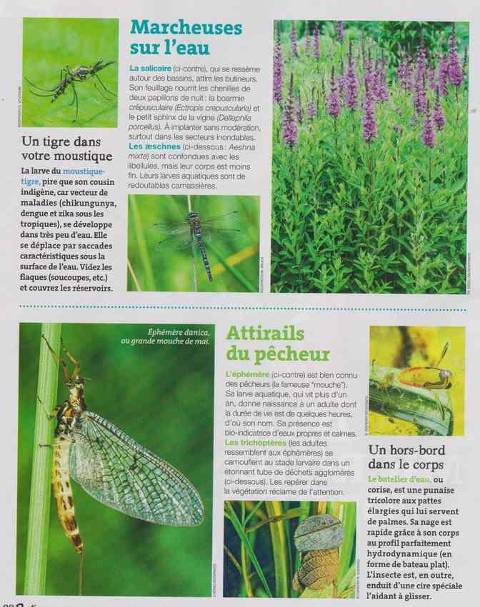 les bestioles - Page 2 15a12