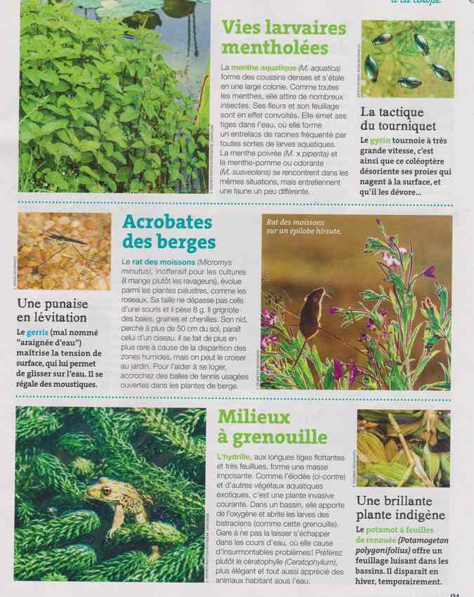 les bestioles - Page 2 15b10