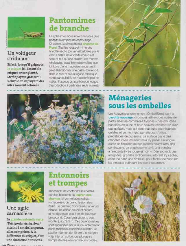 les bestioles - Page 2 15c10