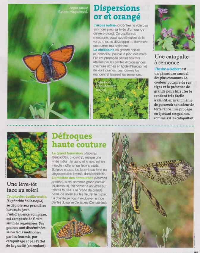 les bestioles - Page 2 15d10