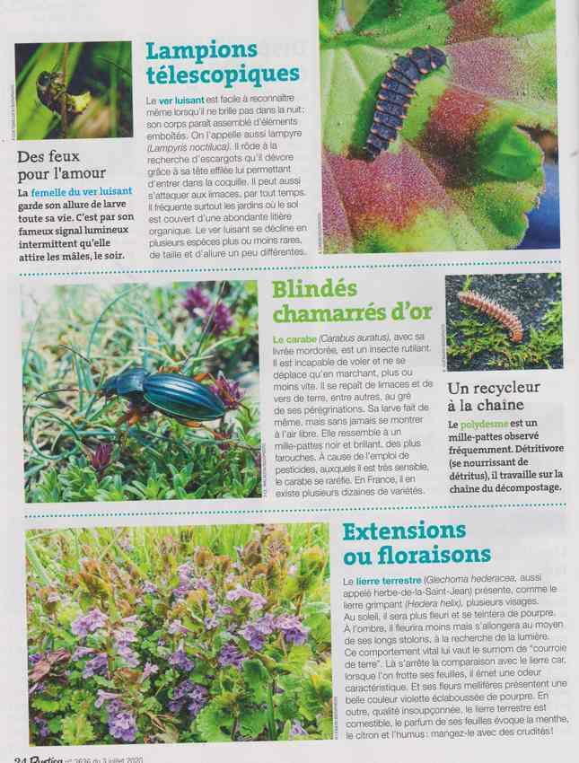 les bestioles - Page 2 15e10