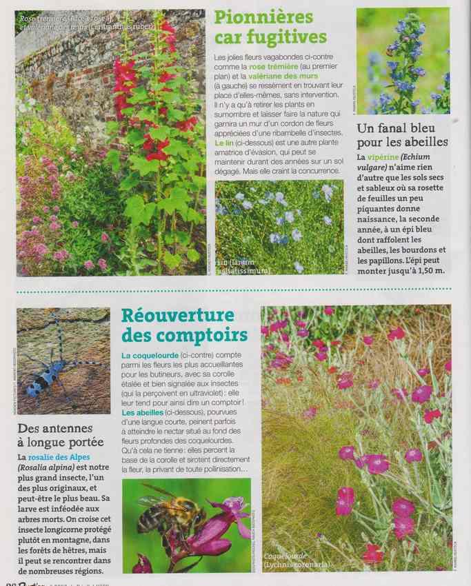 les bestioles - Page 3 15g10