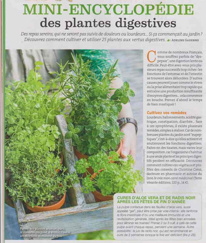 les plantes qui soignent - Page 16 167