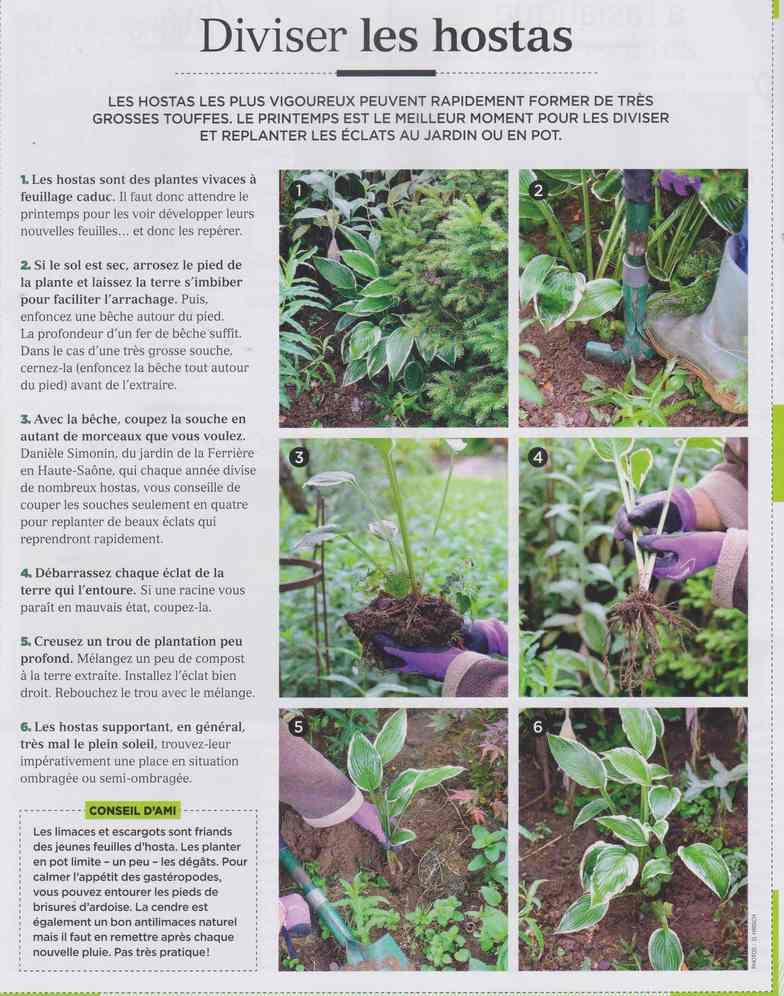 au jardin - Page 24 176