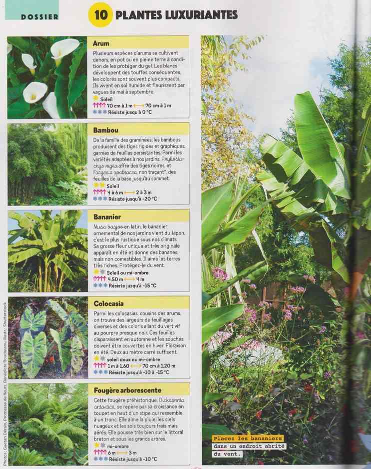 au jardin - Page 26 180
