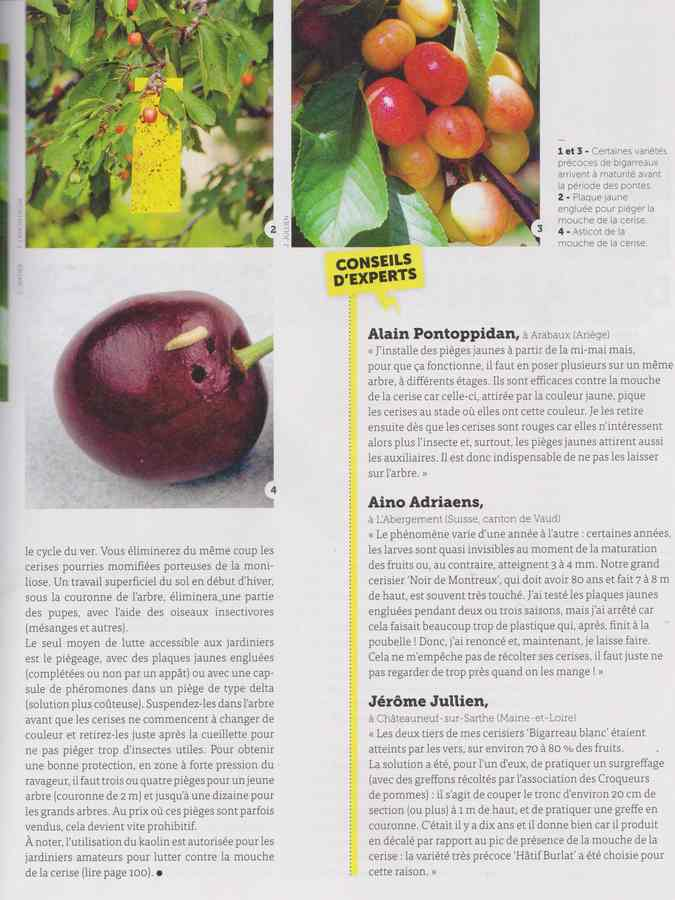 les maladies au jardin - Page 2 18a10