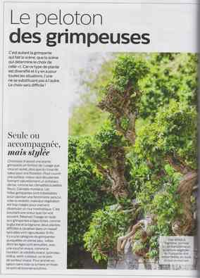 au jardin - Page 16 18a11