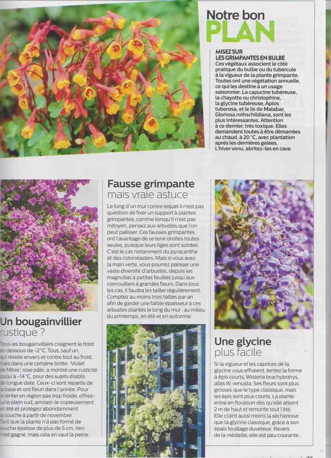 au jardin - Page 16 18b10