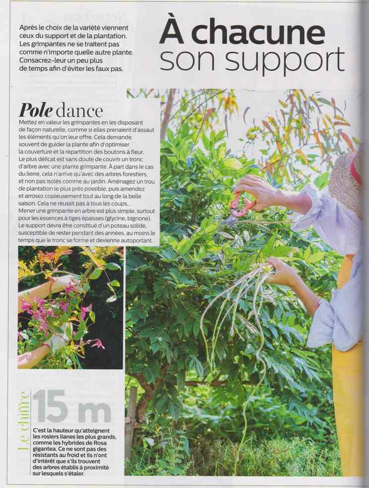 au jardin - Page 16 18c10