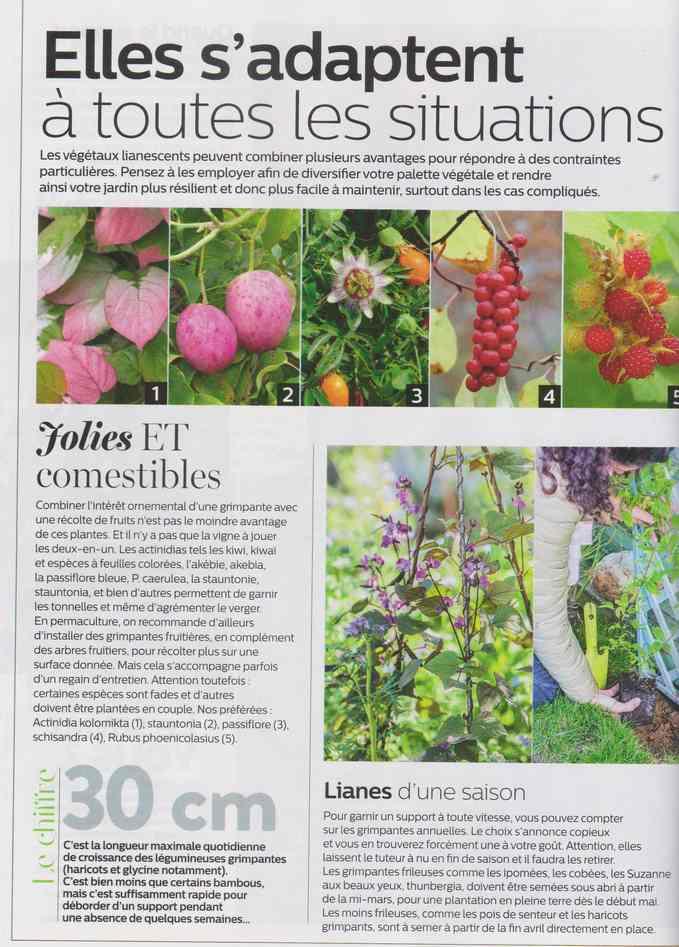 au jardin - Page 16 18e10