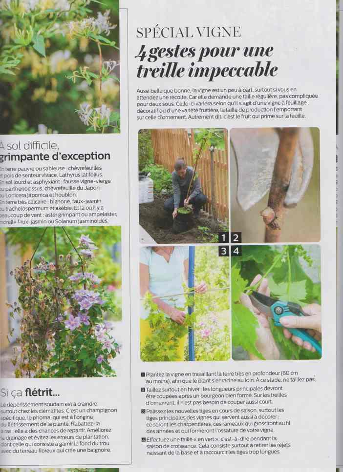 au jardin - Page 16 18f10