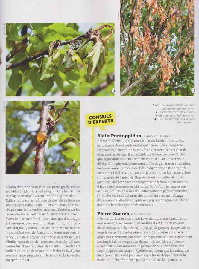 les maladies au jardin - Page 2 19a10