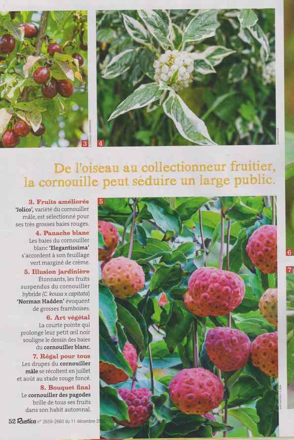 au jardin - Page 6 1a33