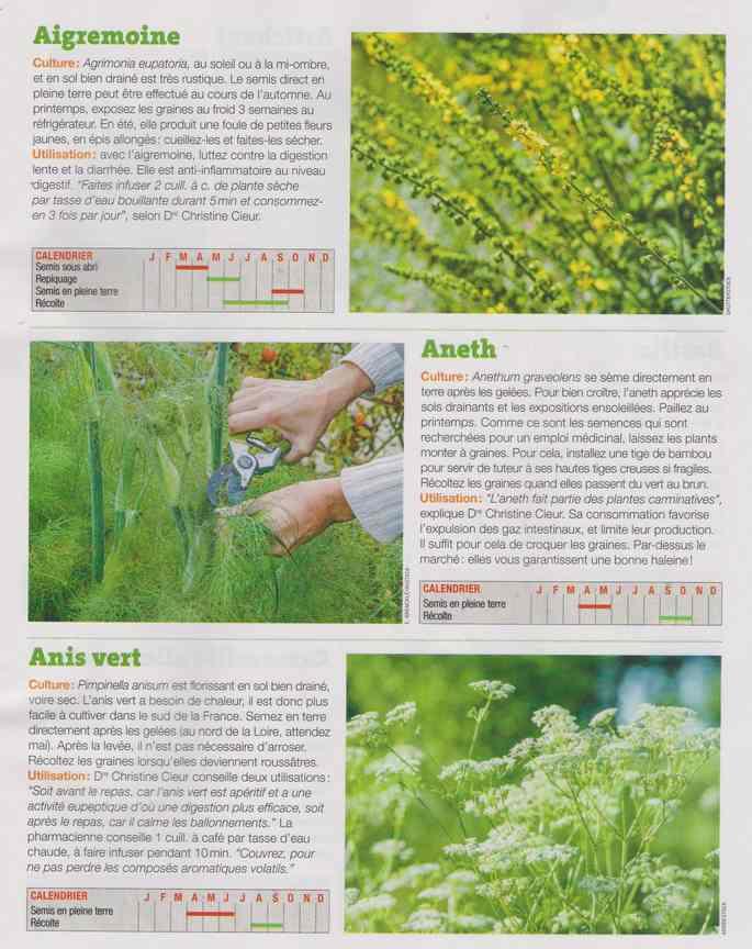 les plantes qui soignent - Page 16 1a40