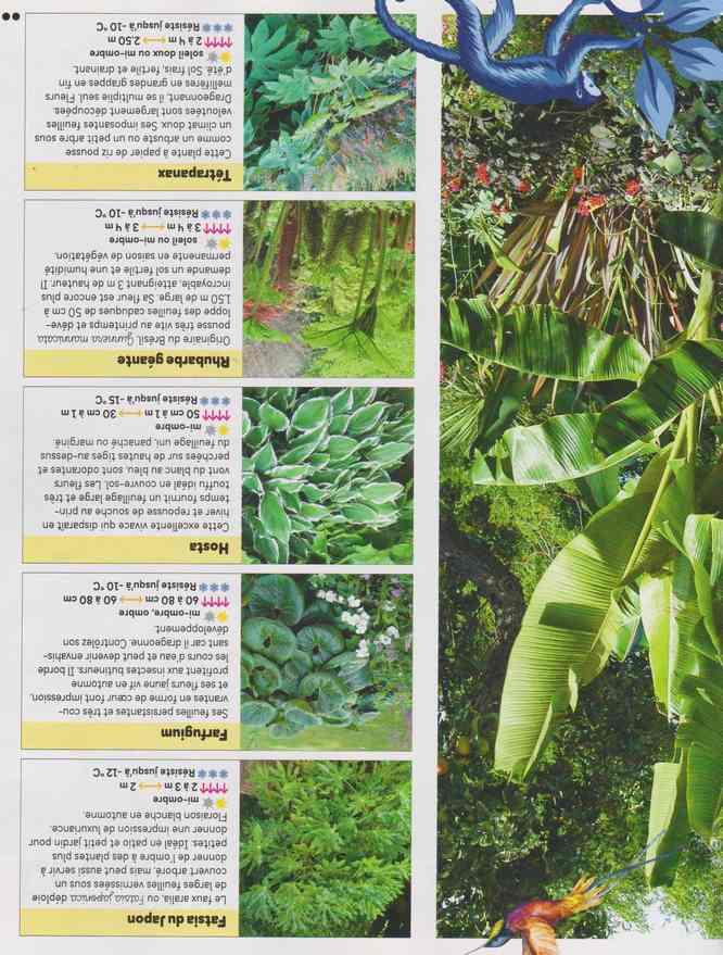 au jardin - Page 26 1a48