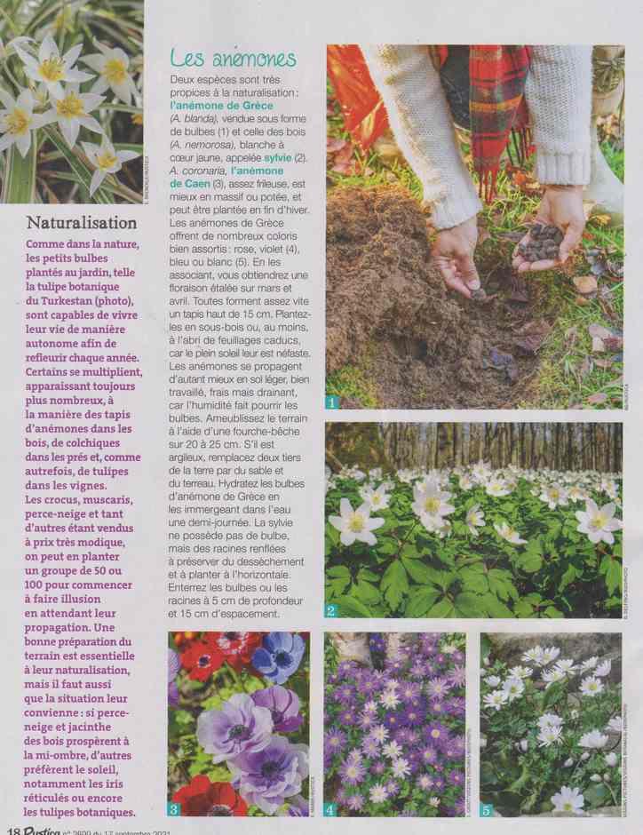 au jardin - Page 29 1a49