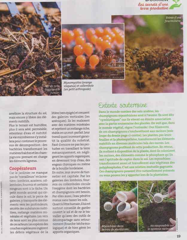 au jardin - Page 4 1b20